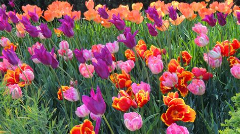 flowers in bloom gorgeous spring flowers to brighten your day spring