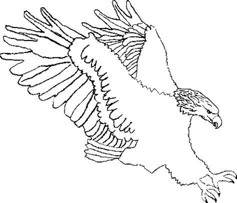 sea eagle coloring page clip art wildlife