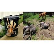 Coconut Crab Attacks Human This Will Give You Nightmares