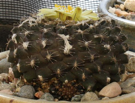 another last blast of summer flowers bergen county new incredible flowers cactiguide com