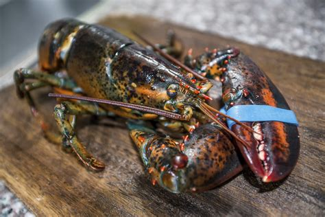 Home Decorative Items Online fresh maine lobsters decorative gift package the fresh