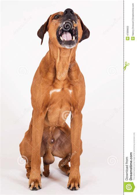 boy puppy catch the treet stock photo image 47899603