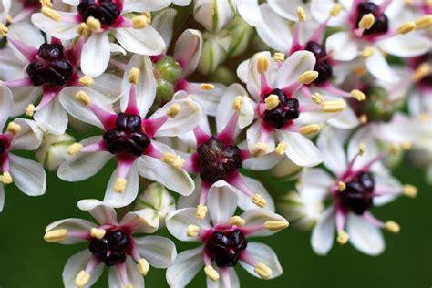 fiori maggio il mondo in un giardino fiori di maggio