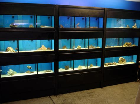 Aquarium Rack by Advice On Aquarium Racks The Planted Tank Forum