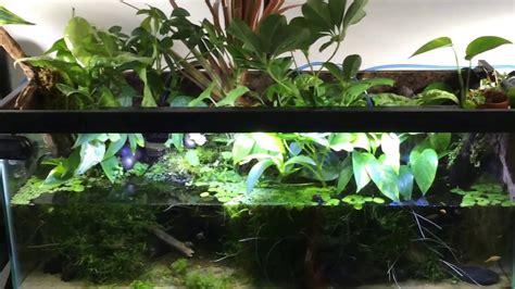 plants  gallon paludarium youtube