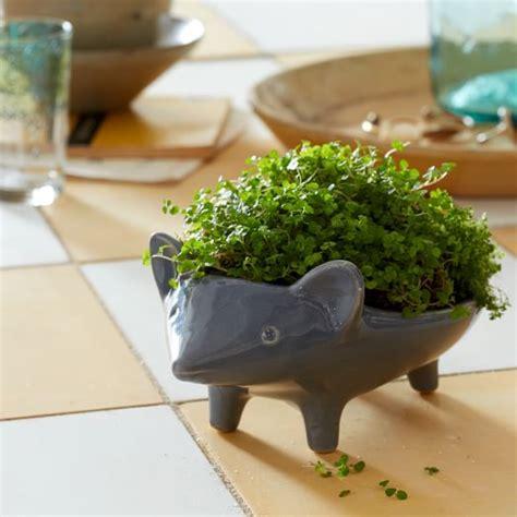 Ceramic Animal Planters by Ceramic Animal Planter Hedgehog West Elm