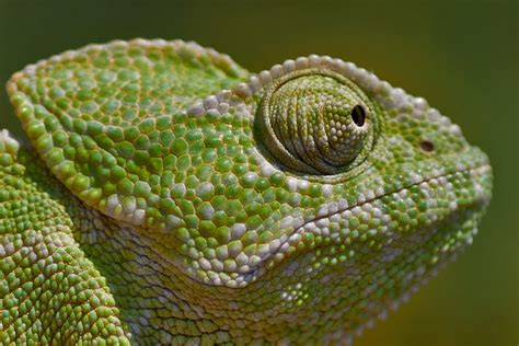 the secret lives of dragons my thoughts on lizards in society