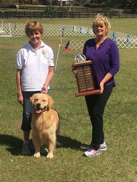 magik golden retrievers conformation archives mid florida golden retriever club