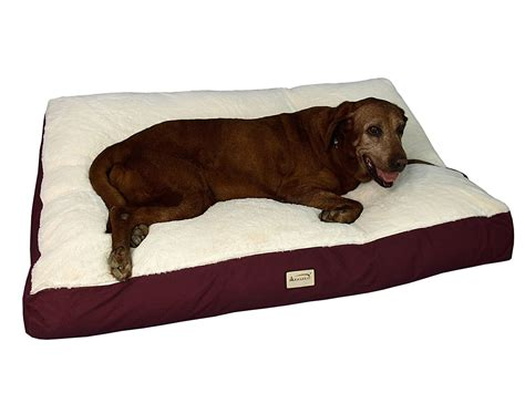 xlarge dog beds dog beds that sit off the floor canada webnuggetz com