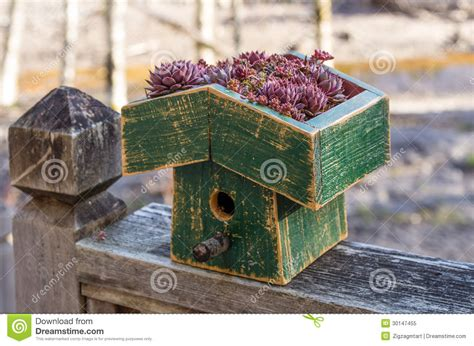 live roof birdhouse bird house with a live green roof royalty free stock photo
