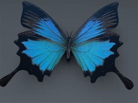Blue Butterfly 3d Model Blue Butterfly 3d And Butterfly Butterfly 3d Animation