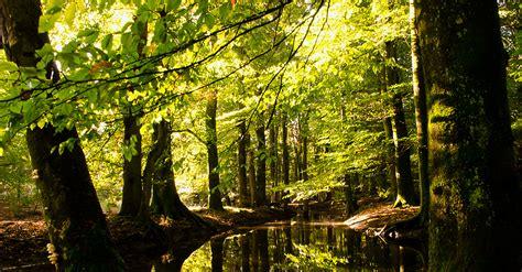 bloemen in afwasmiddel en water fotograferen de herfst is begonnen ren 233 vos natuurfotografie