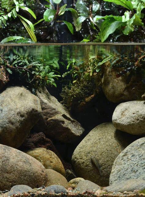 nature   embodiment   biotope aquaria