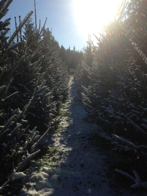 100 christmas tree farms langley best 25 christmas