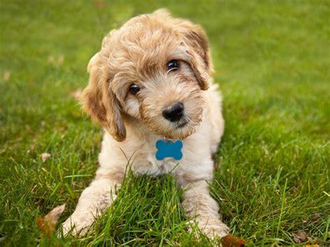 welche teppiche sind für hunde geeignet hunde f 252 r allergiker diese hunderassen eignen sich