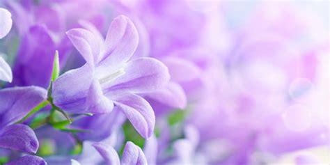 imagenes naturales mas bellas del mundo 15 de las flores mas hermosas del mundo