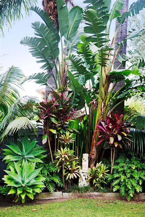 tropical backyard plants tropical landscaping plants www imgkid com the image