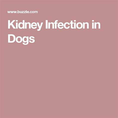 kidney infection in dogs 17 best ideas about kidney infection treatment on kidney infection cure