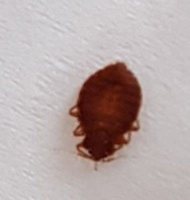 bed bugs halifax pest control canada