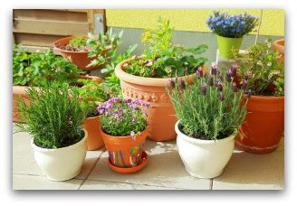 Indoor Container Gardening Tips And Ideas Indoor Vegetable Container Gardening