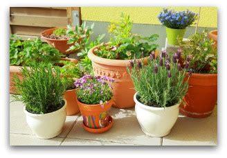 Indoor Container Gardening Tips And Ideas Indoor Container Vegetable Garden