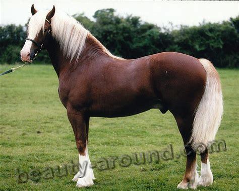most beautiful breeds beautiful breeds most beautiful breed pony most beautiful horses