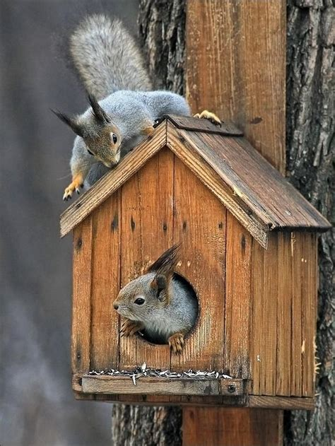 349 best images about ღ 168 ღ squirrel houses squirrel