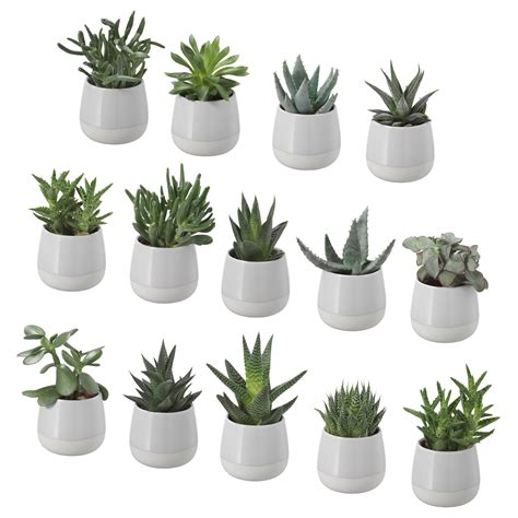 succulent potted plant with pot grey 6 cm ikea