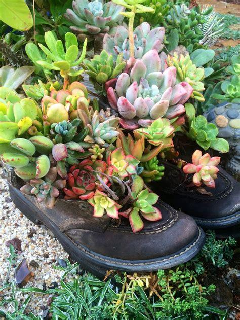 Beginner S Guide To Growing Succulents Garden - my succulent garden boots by designer eubanks at