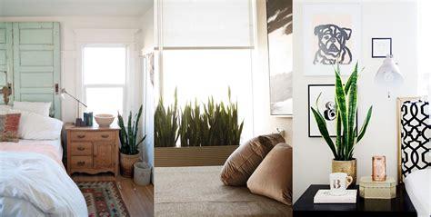 piante in da letto beautiful piante in da letto pictures house