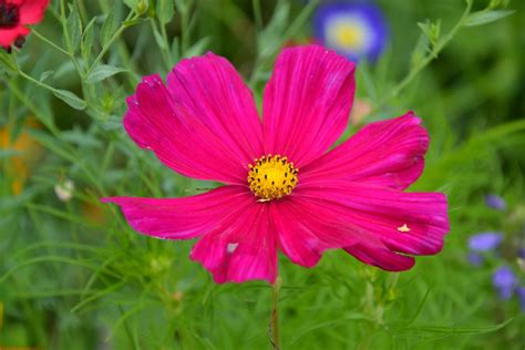 petal color free images field petal color botany flora