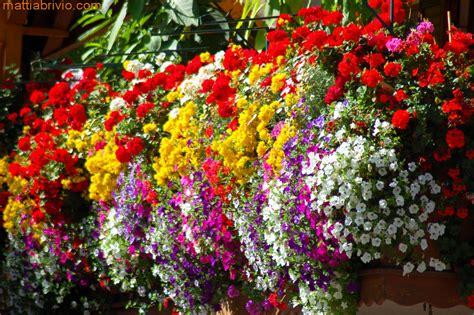balconi fioriti in estate balconi delle dolomiti a photo on flickriver