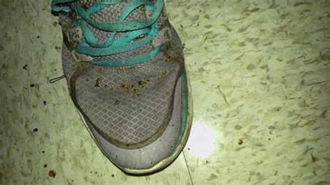 bed bugs in shoes cowleys pest services pests we treat photo album