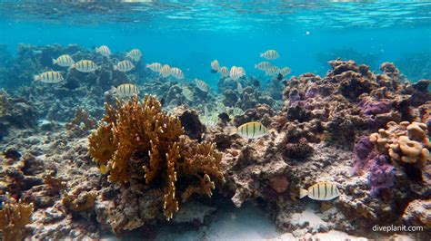 dive cook islands rarotonga diving resorts liveaboards diving rarotonga