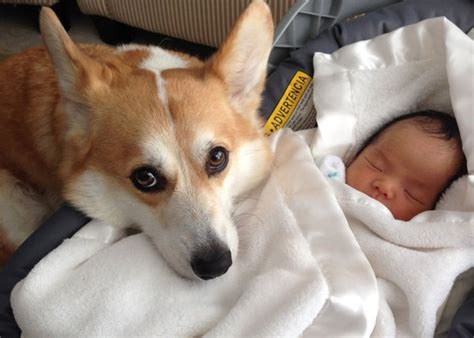 my dog can t get comfortable 7 tips to help your dog get comfortable having a new baby