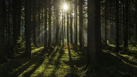 el bosque de los 0060762195 el bosque brit 225 nico que permitir 225 saber c 243 mo ser 225 n en el futuro tele 13