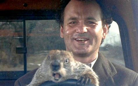 groundhog day with bill murray groundhog day bill murray and scared groundhog the