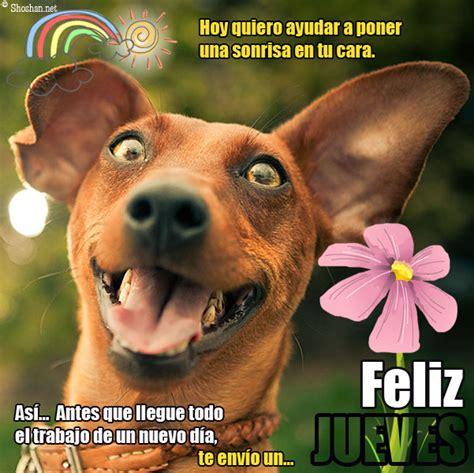 imagenes se feliz martes con perros feliz jueves hoy quiero ayudar a poner una sonrisa en tu cara