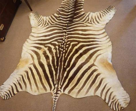 animal shaped rug shaped rug options available in the market