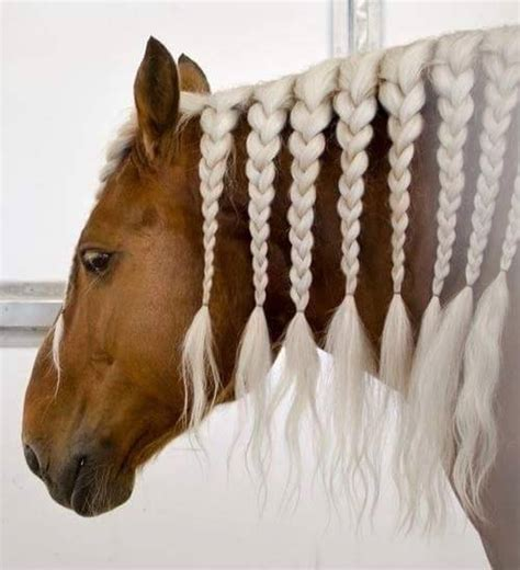 hairstyles for horses cool hairstyles for horses xcitefun net