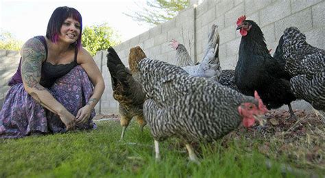Backyard Chickens Arizona Area Residents Squawking About Backyard Chicken