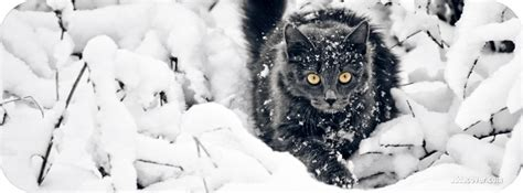 Cat Cover by Winter Covers Winter Fb Covers Winter