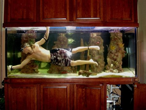 fish tank at home my diy aquaponics system
