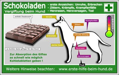 Grasmilben Bei Hunden 2220 by Grasmilben Bei Hunden Grasmilben Herbstmilben