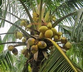 alat pemanjat pokok kelapa anim agro technology mesin petik kelapa inovasi