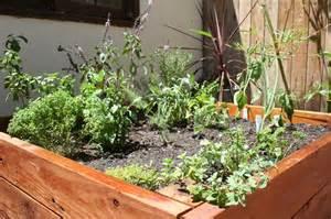 herb garden design the garden glove