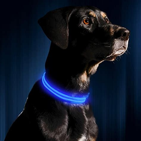 glowing collar the best glow in the led collars and leashes woof whiskers
