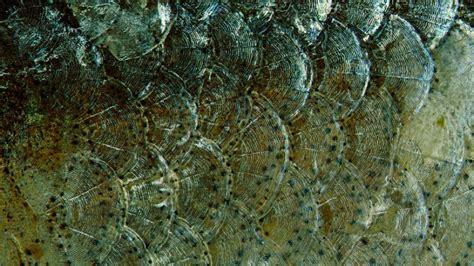 warum haben fische schuppen wozu haben fische schuppen und warum haben nicht alle