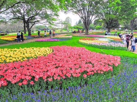 showa memorial park  flower park  tokyo japan