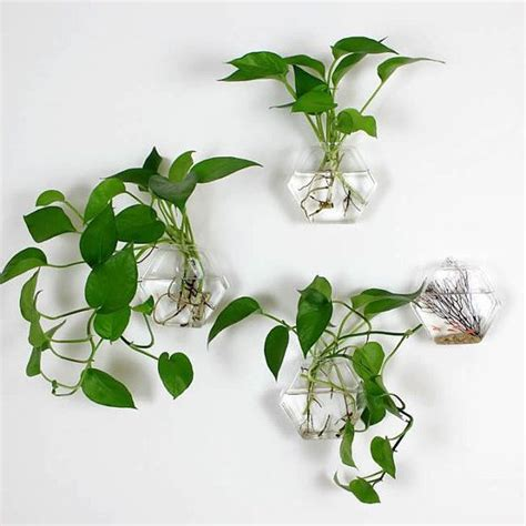 plant wall hangers indoor 1000 ideas about outdoor wall planters on pinterest